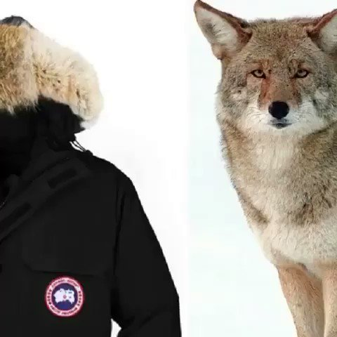 ⚠️G R A P H I C⚠️  You're an animal abuser if you wear Canada Goose parkas - don't believe me👇 https://t.co/uODc3Ck2wU