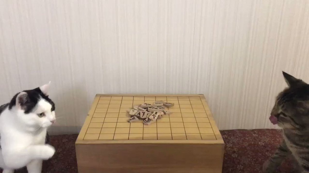 猫同士の将棋崩し pic.twitter.com/Wj48g7eGIh