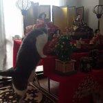 雛壇のベストポジション!慎重に登る猫の姿がたまらなく可愛い!