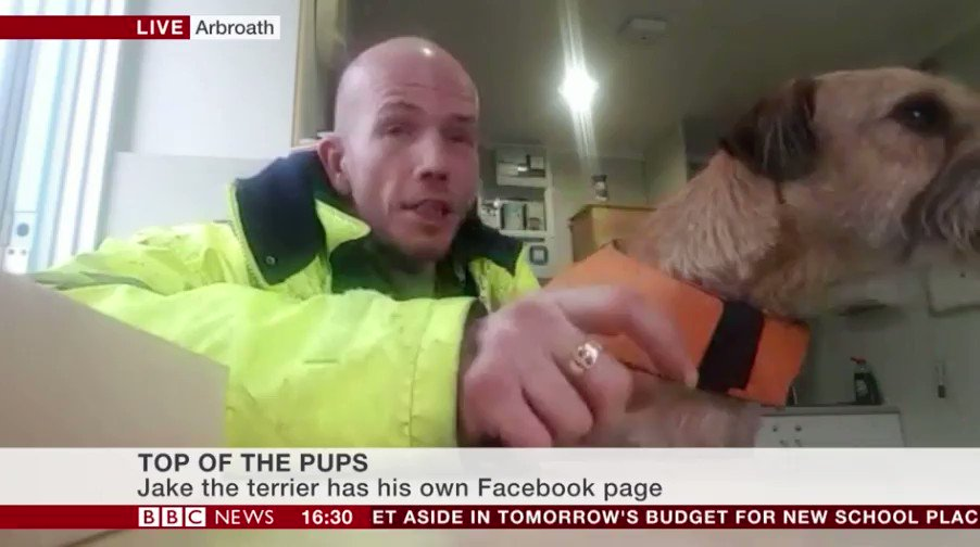 31 Of The Best Damn Dogs On BBC News