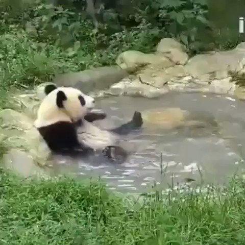 温泉でくつろぐパンダ🐼♨️「気持ちええなぁ〜」