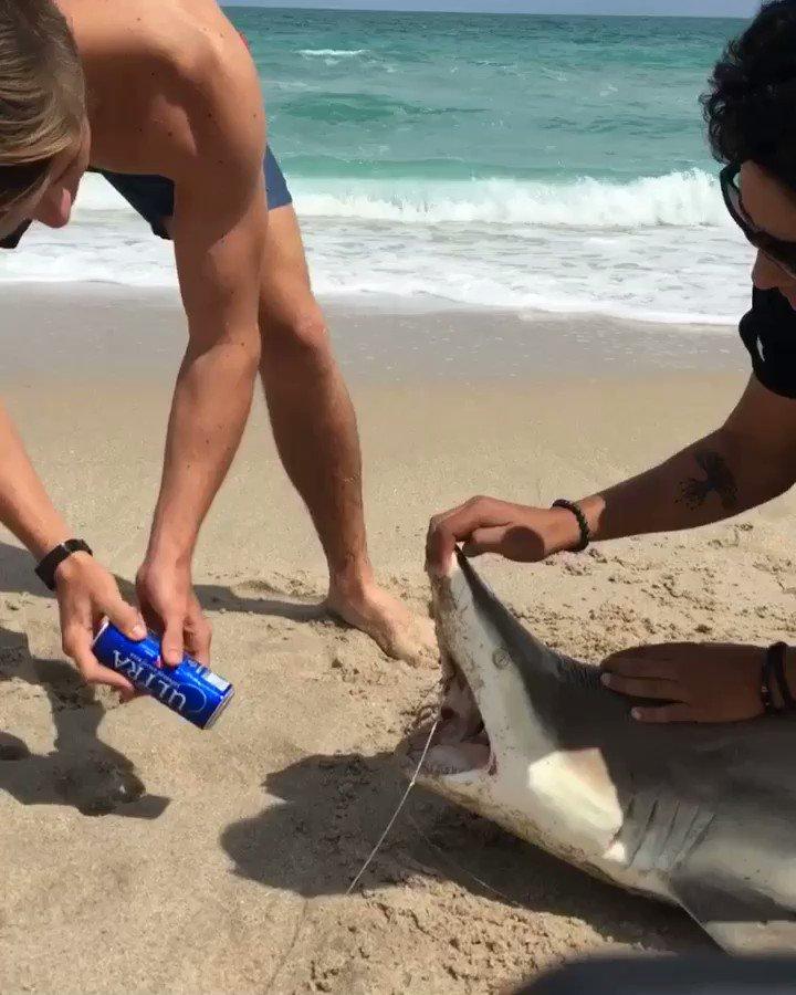 The shark shotgun
