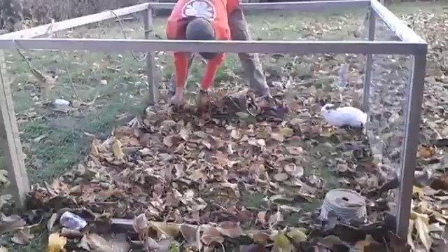 枯れ葉に喜ぶウサギがかわいい✨🐰