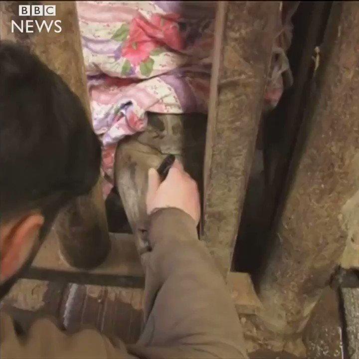 Depuis Thoiry on en est donc à couper préventivement les cornes des rhinos directement dans les zoos. Merveilleux.