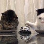 まるでパブロフの猫w横に並んでベルを鳴らして注文する姿が可愛すぎ!