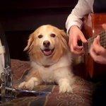 見事なテンポのキープwギターに合わせてバスドラを叩く犬w