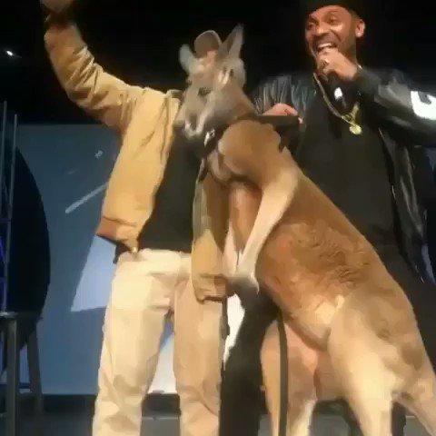 Mike Epps Kangaroo Video