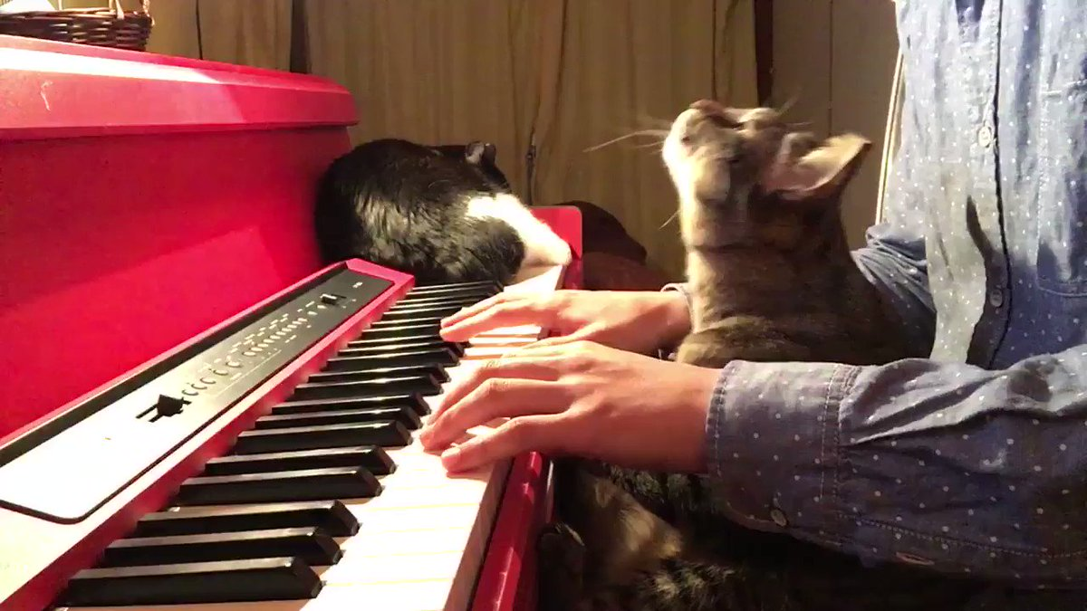 どうぶつの森の2:00AMを猫と弾いてみたら癒された pic.twitter.com/ei99QhbMF6
