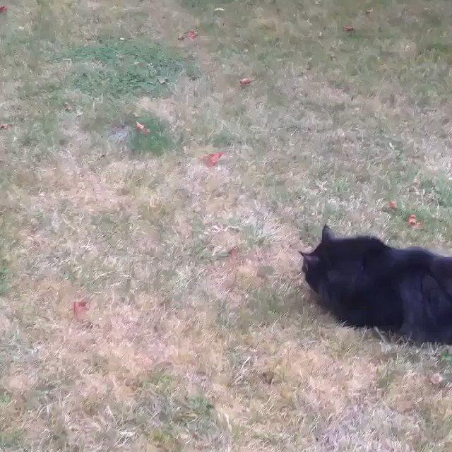 I think this cat is broken 😂😂 https://t....