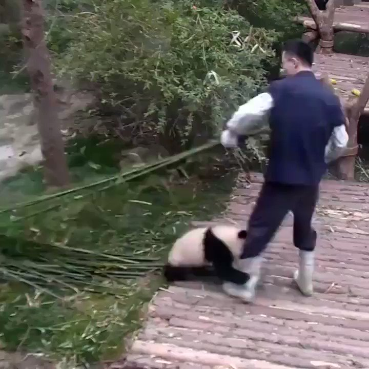 RT @webcamsdemexico: Esos pandas son unos loquillos.  RT @Helen13658222:   This is so cute!⚘🌱🌲🌳 https://t.co/3DOfkKz0St
