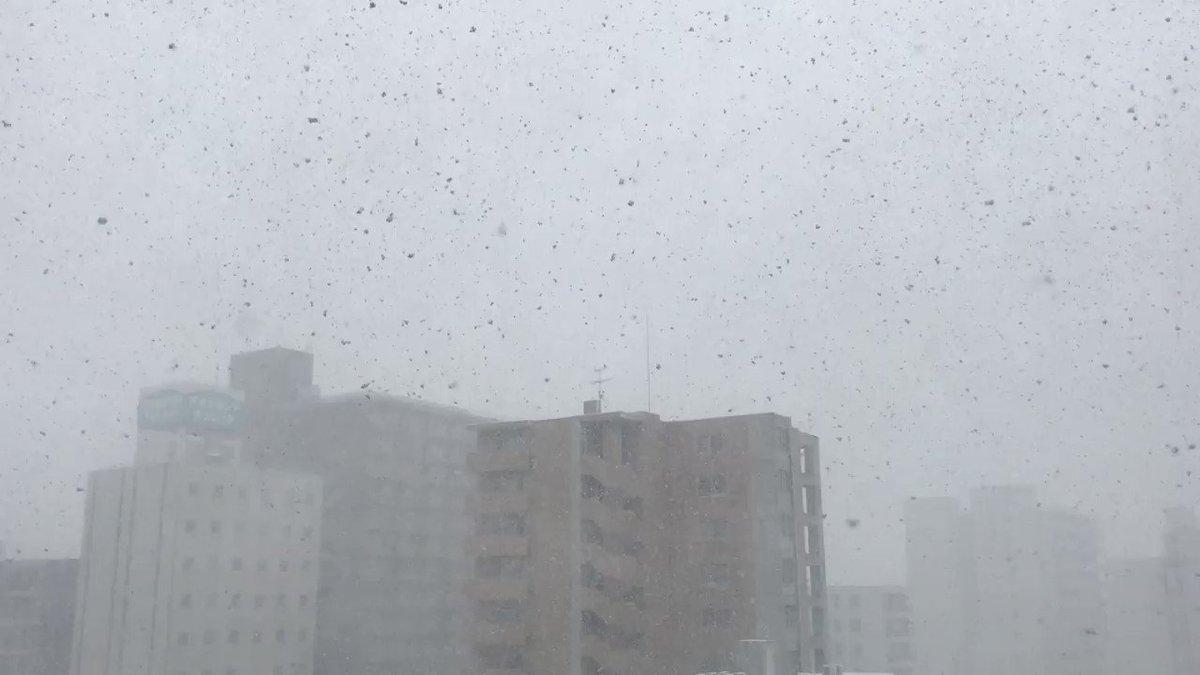 4月中旬ですが、道内各地は積雪に見舞われています。 動画は、雪解けが進み先日積雪ゼロを記録した札幌市内の現在の様子です。雪が舞っています… https://t.co/RXXjT2uEuX