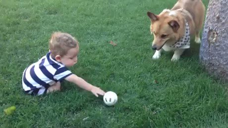 아기가 공을 잡지 못하자 공을 밀어줍니다. 쟤들도 상황판단을 한다.... https://t.co/bpTJJKujBv