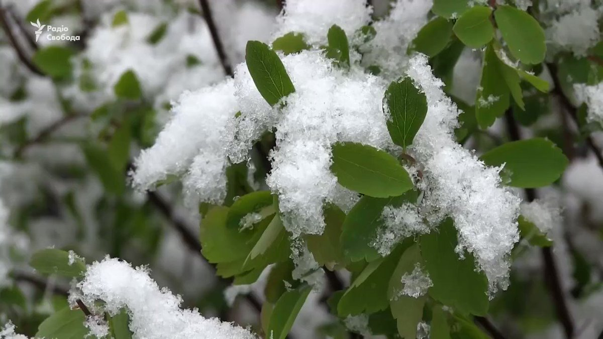 Unusual snowstorm hit today  Kharkiv and Dnipro regions, some schools will be closed