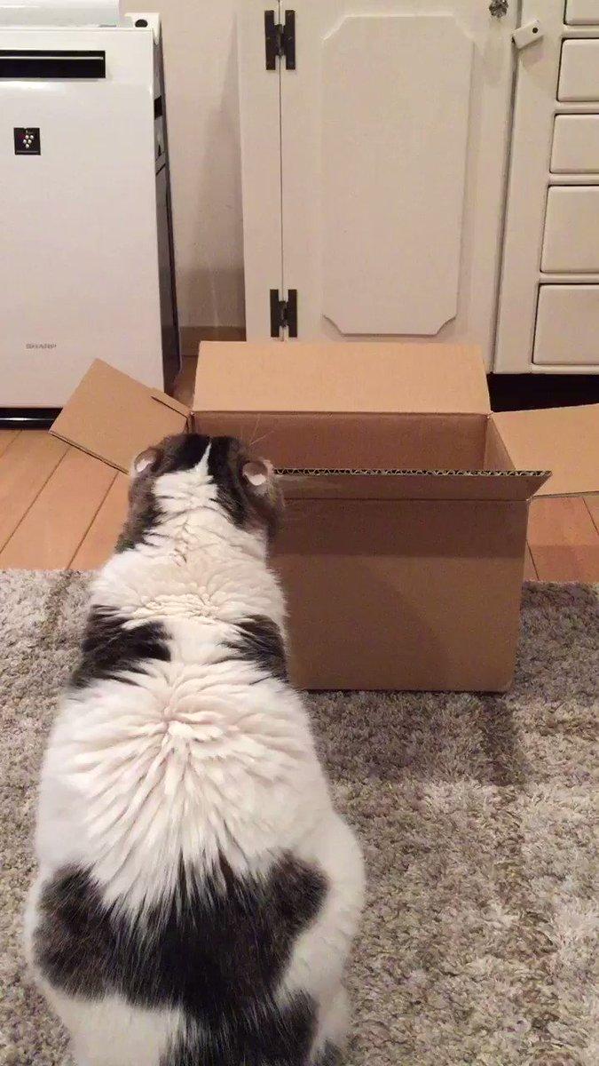 箱に入った途端に、寝る! pic.twitter.com/6aC4ma2WOe