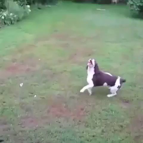 If Claudio Bravo was a dog... https://t.co/vRssiOGV7Q