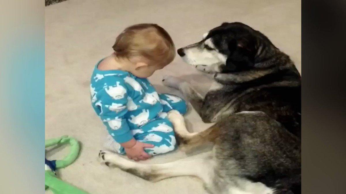 Смешные гифки с животными и детьми