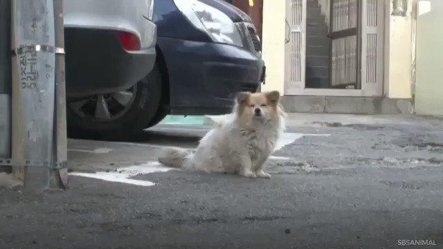 Anjing ini menanti majikannya selama 3 tahun.... https://t.co/tA9pBzC0S4