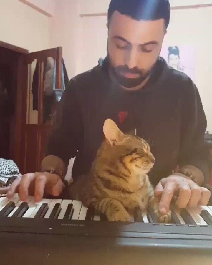 This Amazing Cat Plays Piano Better Than You Ever Could