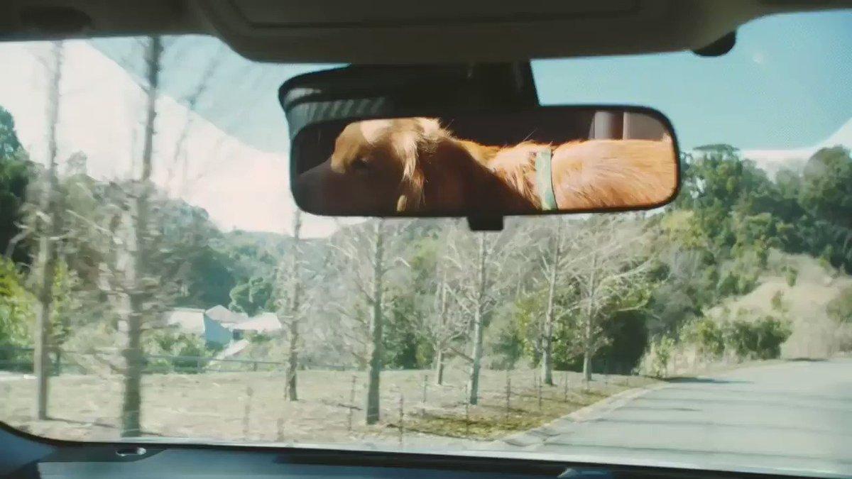 ⚠ dog&drive 獣医と考える、快適なクルマ シリーズ 顔出し編 ⚠ #犬 #車 #ドライブ #顔出し #注意 #Nissan
