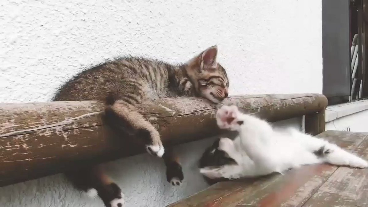 ⚠ #猫バンバン Project movie byNISSAN ⚠ 車を運転する者の秋冬の常識にしたいですね! #猫 #車 #knockknockCats #冬 #注意 #Nissan