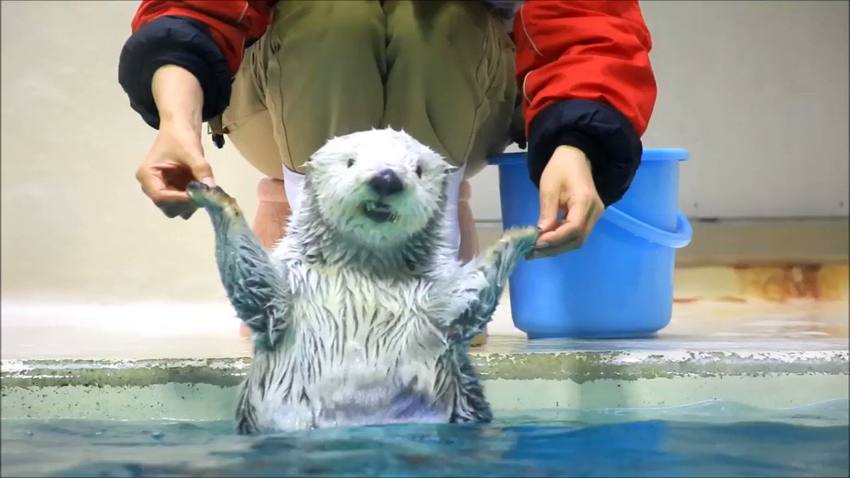 Modeling otter busts out all its best poses for photoshoot