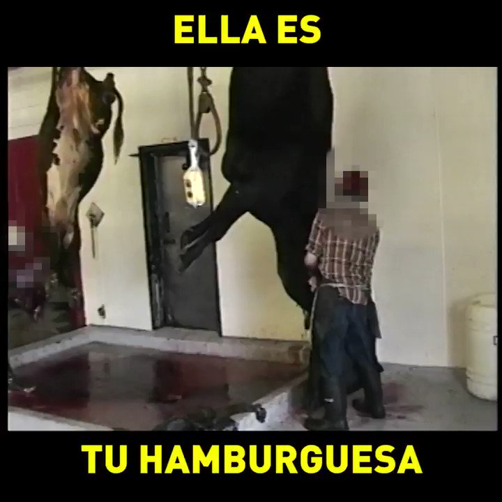 Por ella soy #vegano. 💔 #NationalHamburgerDay https://t.co/qbqEuoGdzY