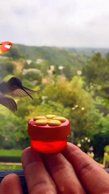 def best snap lens yet https://t.co/GGlV3nNWOF