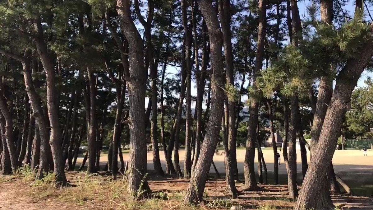 皆さん〜今日も一日、お疲れ様でした。(*゚▽゚)ノ 今日もガバリましたね〜 それではゆっくり休んで下さいね〜むっホッホ♪(´ε` ) 動画はまだまだ光市虹ヶ浜、ここは松林でも有名なんだね〜 https://t.co/WKoPB6PEoU