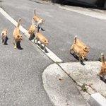 茶トラ猫が集まった結果?まるで親戚の集まりみたい!