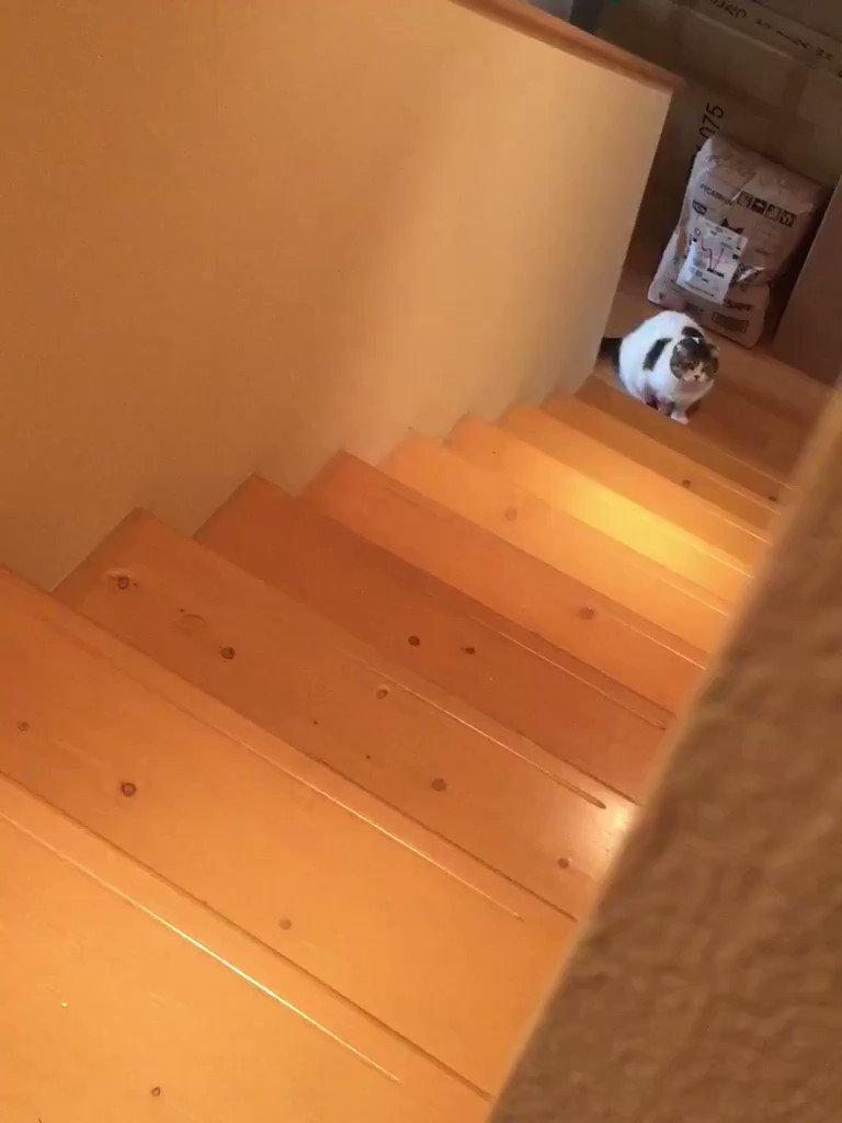 階段の昇り降りは、身体に似合わずリズミカル♪ pic.twitter.com/nvKHp3ymj3