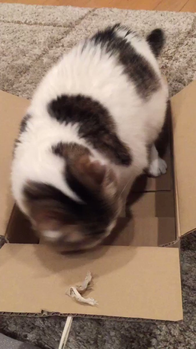 一瞬で箱の中にきれいピッタリ収まる方法。 pic.twitter.com/GH90RlTgWW