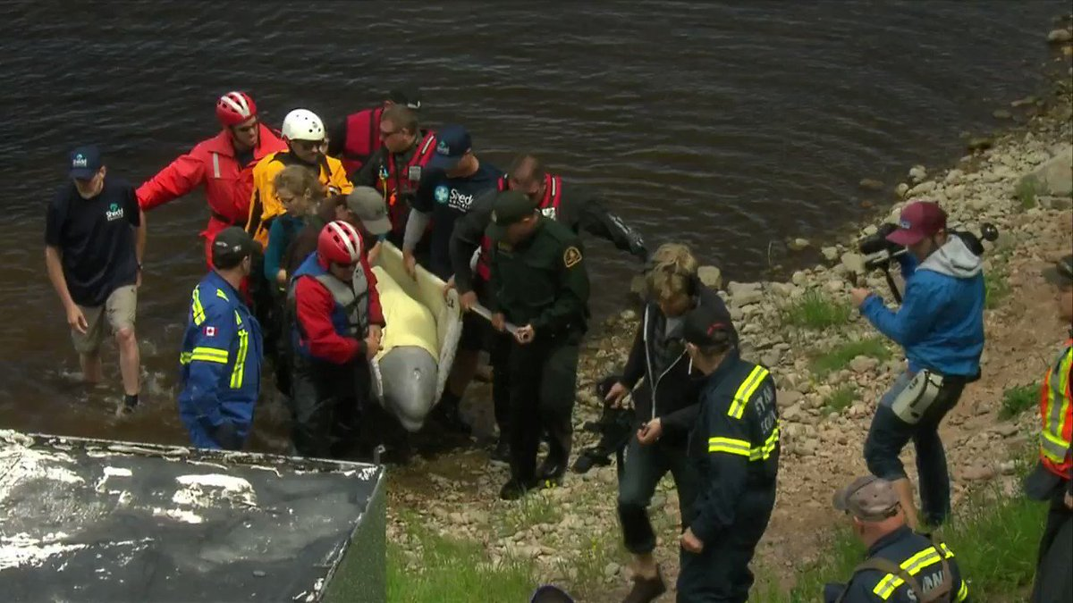 Today's beluga rescue required planes, cranes and automobiles.  Read more: https://t.co/2TNQU8LtXd https://t.co/SXvF9cO6AX