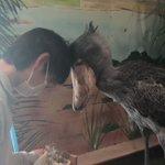 園の人がハシビロコウさんと挨拶するの見せてくれた。可愛い pic.twitter.com/lscPe…