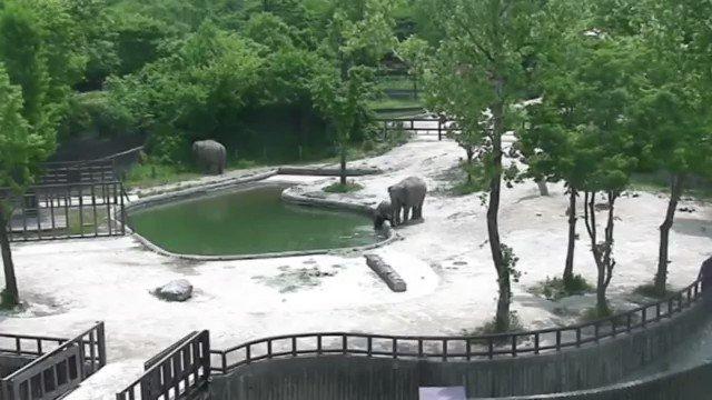 Elefantes salvam filhote de afogamento em zoológico em cena digna de filme https://t.co/fEyHgamKrf