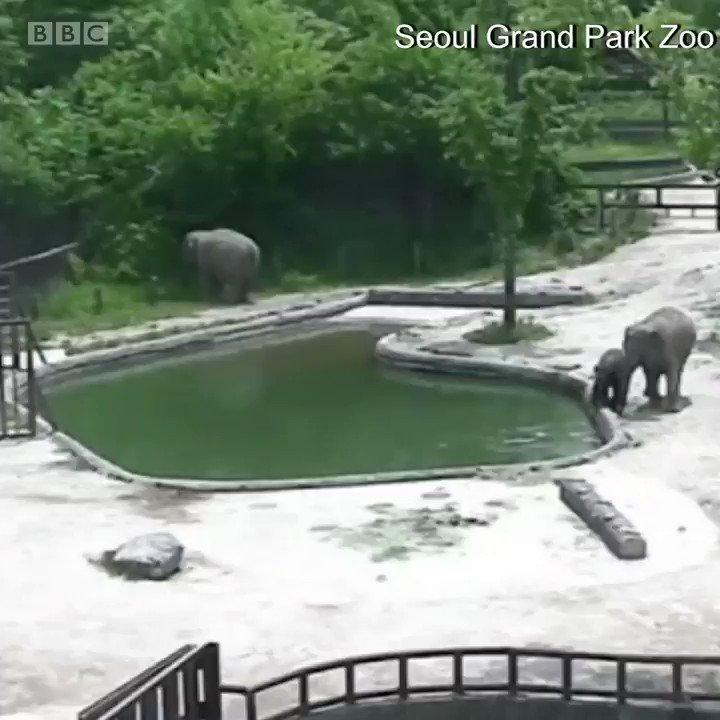 小象落水 https://t.co/ZZRRVRbizG
