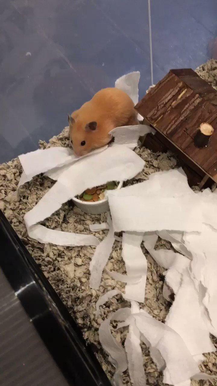 Hamster https://t.co/6n8UsjjvrH