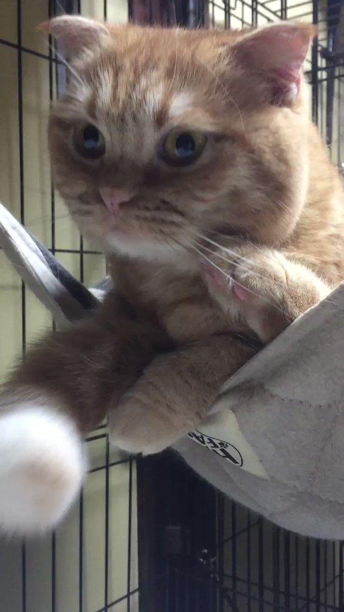 ウニちゃんがハンモックであんよを投げ出して、しっぽをペロペロ抱っこしてました。萌え…。 pic.twitter.com/wy1kQHhHq3