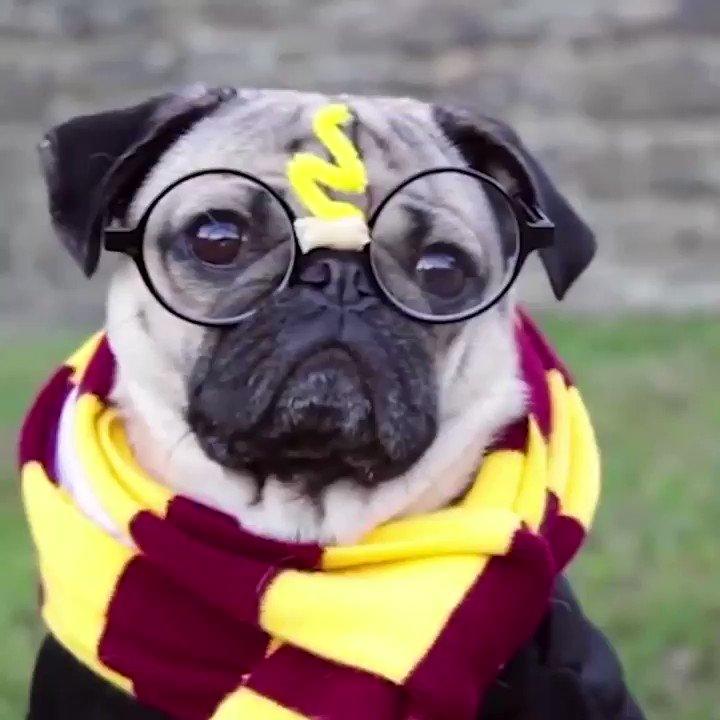 Still waiting on my letter from Hogwarts #HarryPotter20 https://t.co/e...