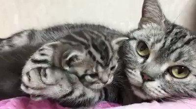 Te damos los #BuenosDias y #FelizJueves con esta mamá gata. 😊 https://...