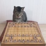 将棋界に新たな新星!?ねこ棋士の滑らかな一手に驚愕!