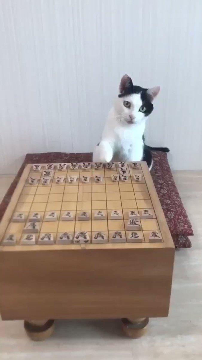 白黒棋士 pic.twitter.com/HwZ5CnnKen