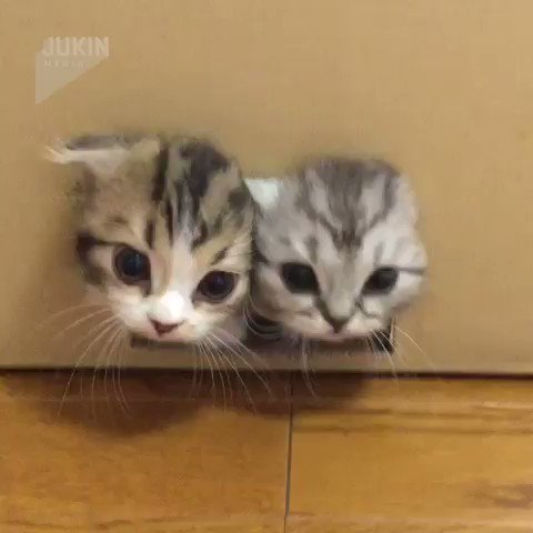 箱からたくさんの子猫がX)
