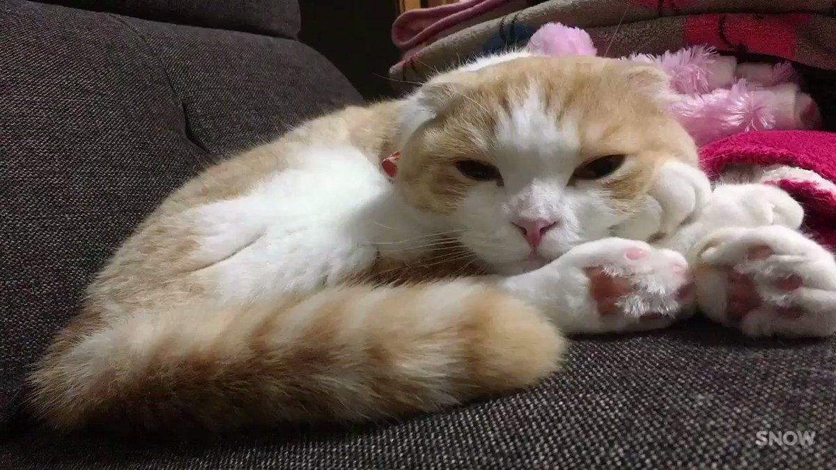 猫あるある pic.twitter.com/9NZNCWNA3B