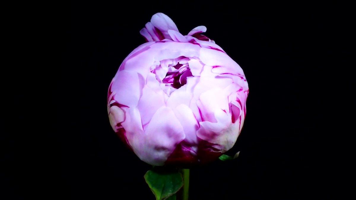 Гифы распускающиеся цветы