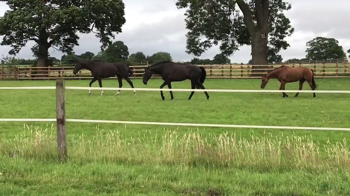 Enjoying the paddock after morning exercise #suedois #sobeloved #customcut #chancery #watchable #thatisthespirit