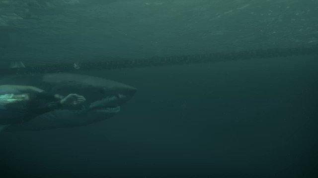 The moment of glory for #TeamShark!!! #PhelpsVsShark #SharkWeek https://t.co/NWYp1CwiRa