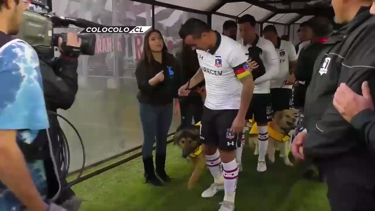 Replying to @ftbllrswanimals: Colo-Colo players walking onto the pitch with dogs available for adoption
