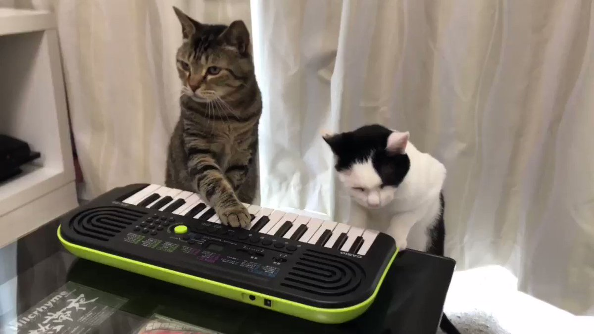 Cats Play the Piano