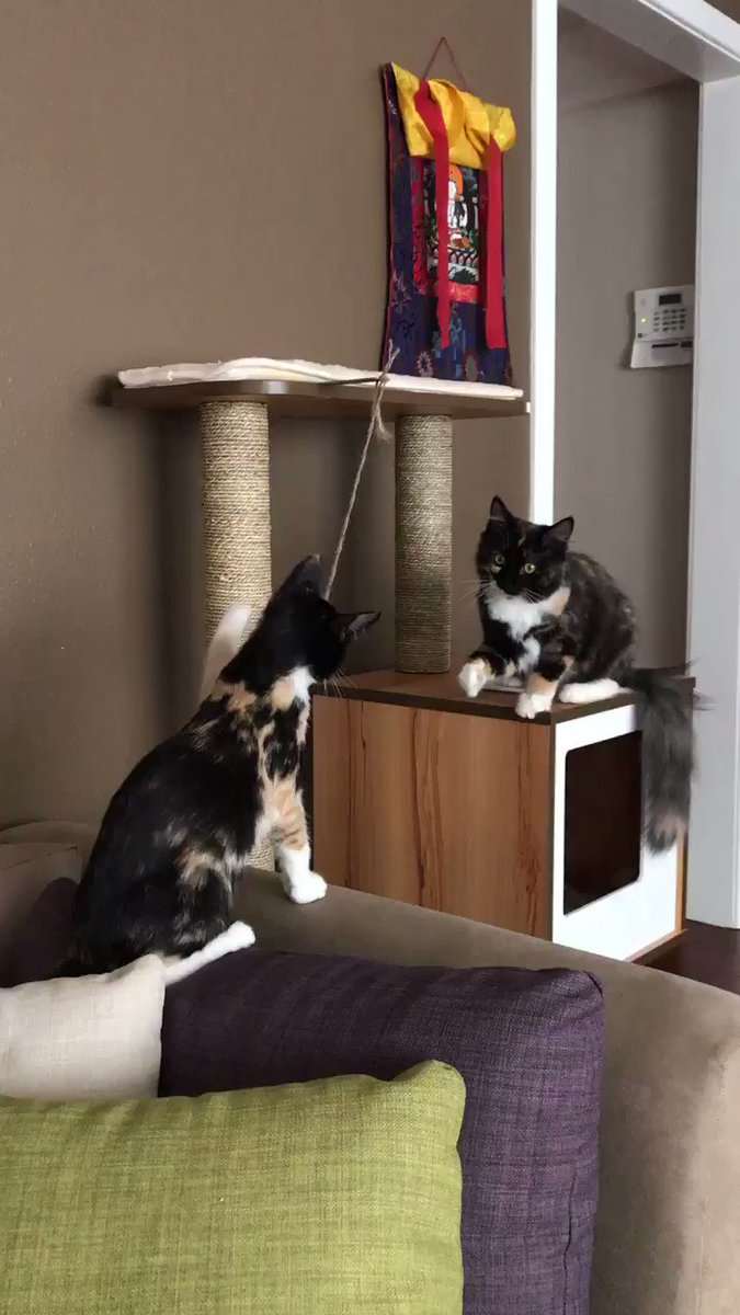 I'm just going to leave this here for anyone who needs to see kittens playing tether ball today https://t.co/3uAm81iHOG