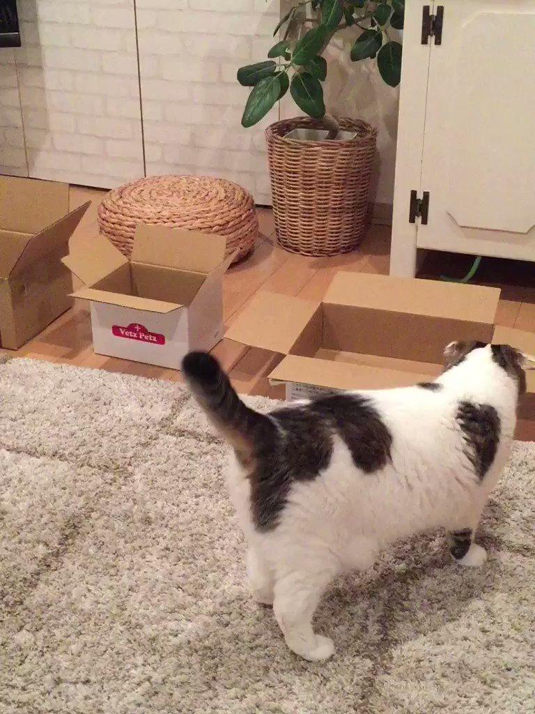 どんな箱でもとりあえず入ってみるタイプ。でも1番しっくりくるのはやっぱりゆうパック箱✨ pic.twitter.com/asaxdmU5Ee